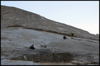 10-L1-Half Dome-Snake dike-IMG 7490 by Francois